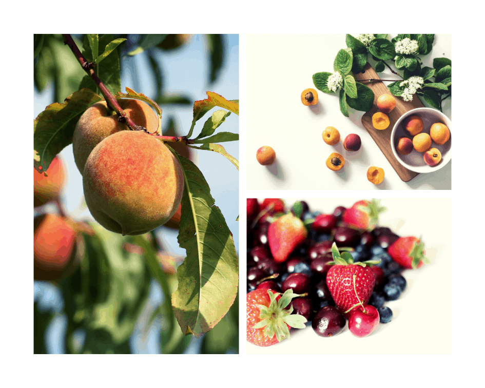 Fruits in season Jul-Aug